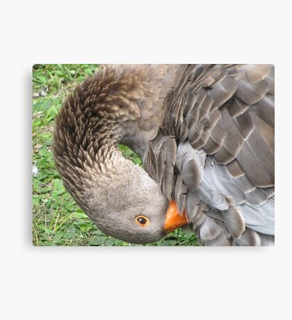 you ruffle my feathers Canvas Print