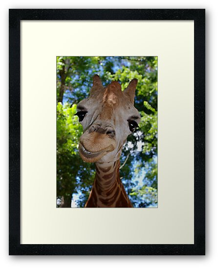 Giraffe Portrait V:  Keep on Smilin' by Alison M
