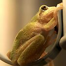 Tree Frog by tcat757
