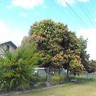 Mango Tree in Bloom by 4spotmore