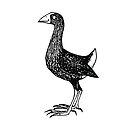 Suzy Swamphen - Raising funds for BirdLife Australia by Paula Peeters
