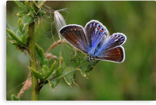 Lady Blue by Jo Nijenhuis