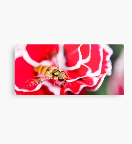 Hover fly on carnation Metal Print