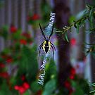 Argiope Orb Web Spider by jules572