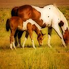 Togetherness by socalgirl