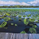 Off the Dock on the River Taking in the View of Lily Pads  by Wendy Crouch