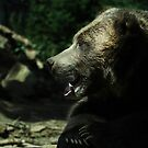 Grizzly by KatsEyePhoto