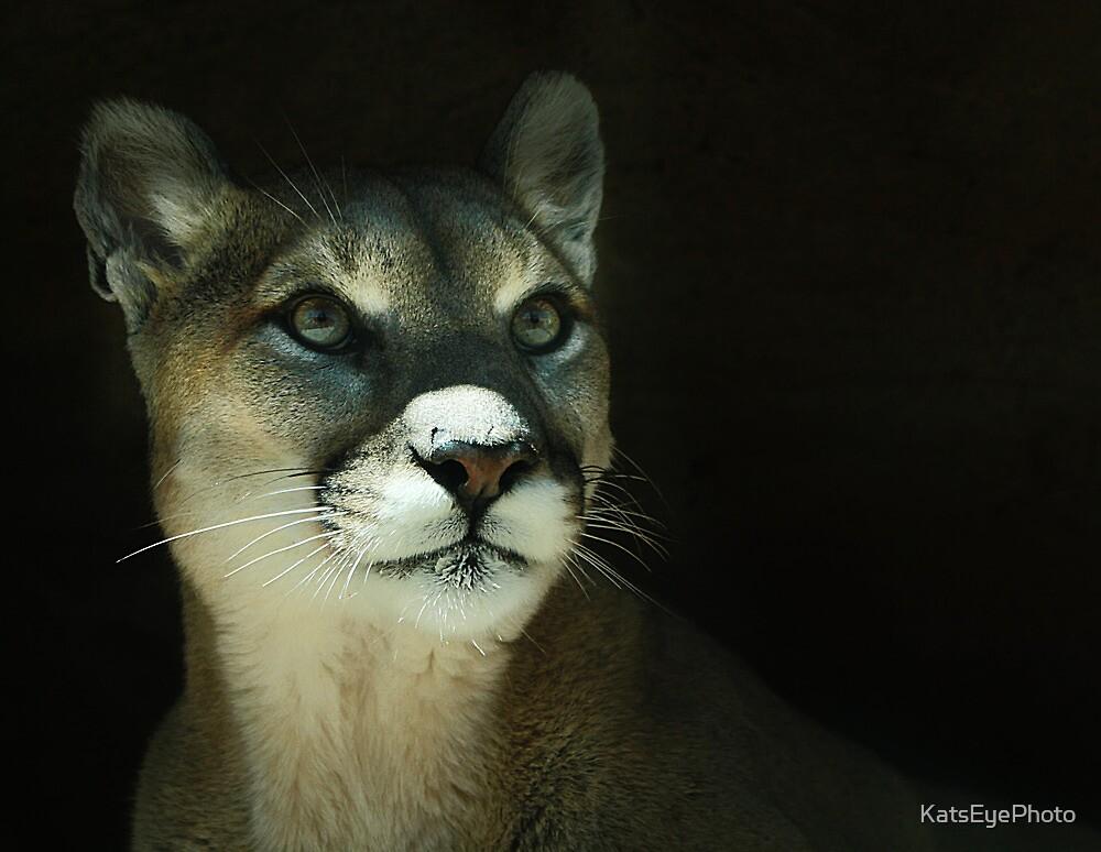Mountain Lion by KatsEyePhoto