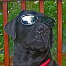 top dog by mikepaulhamus