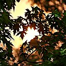 Sunset Behind Maple Tree by KnutsonKr8tions