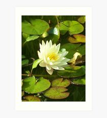 Yellow Water Lilly Art Print