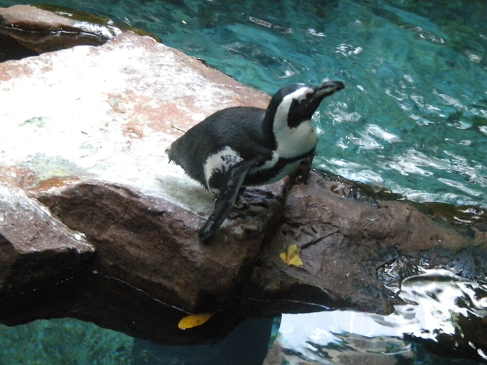 Penguin by kaylie