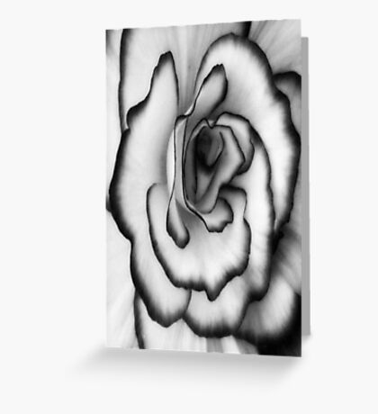 Beauty can still be found even without color!!! ©  Greeting Card