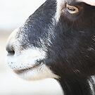 Black Beard by pallyduck