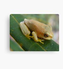 cute little froglet Canvas Print