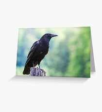 Cades Cove Crow Greeting Card