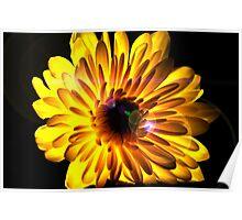Flashlight Flower Poster