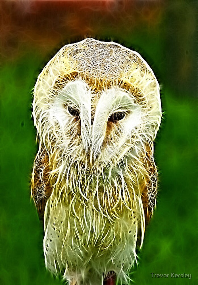 Fractalius Barn Owl by Trevor Kersley