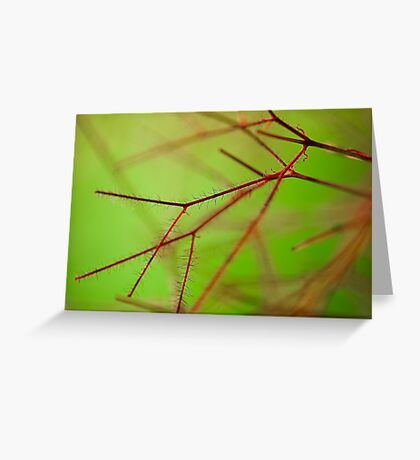 Smoke bush detail Greeting Card