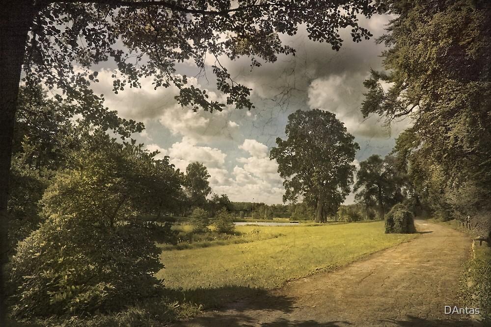 Beautiful World by Danuta Antas