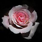 Delicately Pink by Len Bomba