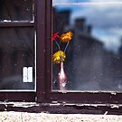Window and Flower by Andre van Eyssen
