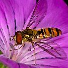 Pollination 8 by Gareth Jones