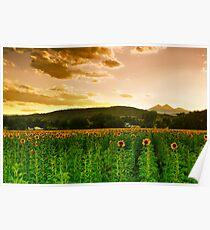 A Rural Sunflower Sky Poster