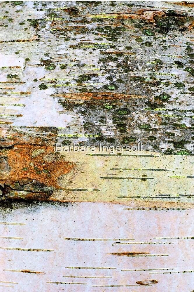 Birch by Barbara Ingersoll