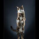« CATS - AJ ©alexisreynaud.com » par Alexis Reynaud