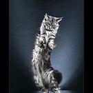 « CATS - AUBADE ©alexisreynaud.com » par Alexis Reynaud