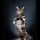 « CATS - BETULLA ©alexisreynaud.com » par Alexis Reynaud