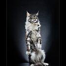« CATS - BLAKE ©alexisreynaud.com » par Alexis Reynaud