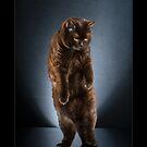 « CATS - BRUTUS ©alexisreynaud.com » par Alexis Reynaud