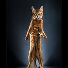 « CATS - CALI ©alexisreynaud.com » par Alexis Reynaud