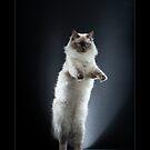 « CATS - COTON (1) ©alexisreynaud.com » par Alexis Reynaud
