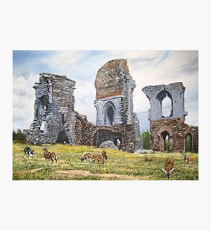 Soay sheep at Corfe Castle. Photographic Print