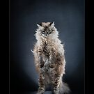 « CATS - GAIA (1) ©alexisreynaud.com » par Alexis Reynaud