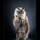 « CATS - GAIA (2) ©alexisreynaud.com » par Alexis Reynaud