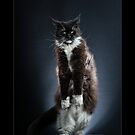 « CATS - IMADO ©alexisreynaud.com » par Alexis Reynaud