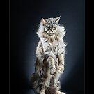 « CATS - LAS VEGAS ©alexisreynaud.com » par Alexis Reynaud