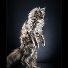 « CATS - NEVA (1) ©alexisreynaud.com » par Alexis Reynaud