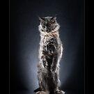 « CATS - NOTORIETY ©alexisreynaud.com » par Alexis Reynaud
