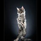 « CATS - OBELIX (2) ©alexisreynaud.com » par Alexis Reynaud