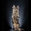 « CATS - ORIGAMI ©alexisreynaud.com » par Alexis Reynaud