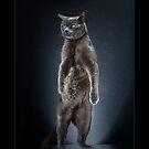 « CATS - PETZI (1) ©alexisreynaud.com » par Alexis Reynaud
