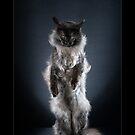 « CATS - TANGO (1) ©alexisreynaud.com » par Alexis Reynaud