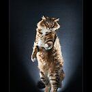« CATS - TOUMA ©alexisreynaud.com » par Alexis Reynaud