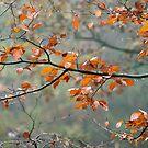 Buche Blätter im Regen von Sue Robinson