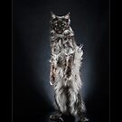 « CATS - NODDY ©alexisreynaud.com » par Alexis Reynaud